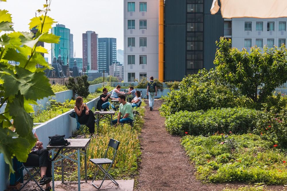 Zo'n plekje is bijvoorbeeld de DakAkker. Het ziet eruit als een groene binnenplaats, maar dan 20 meter in de lucht. Daarnaast is het het eerste groene dak van Nederland waar groenten en fruit worden verbouwd en honingbijen worden gehouden.