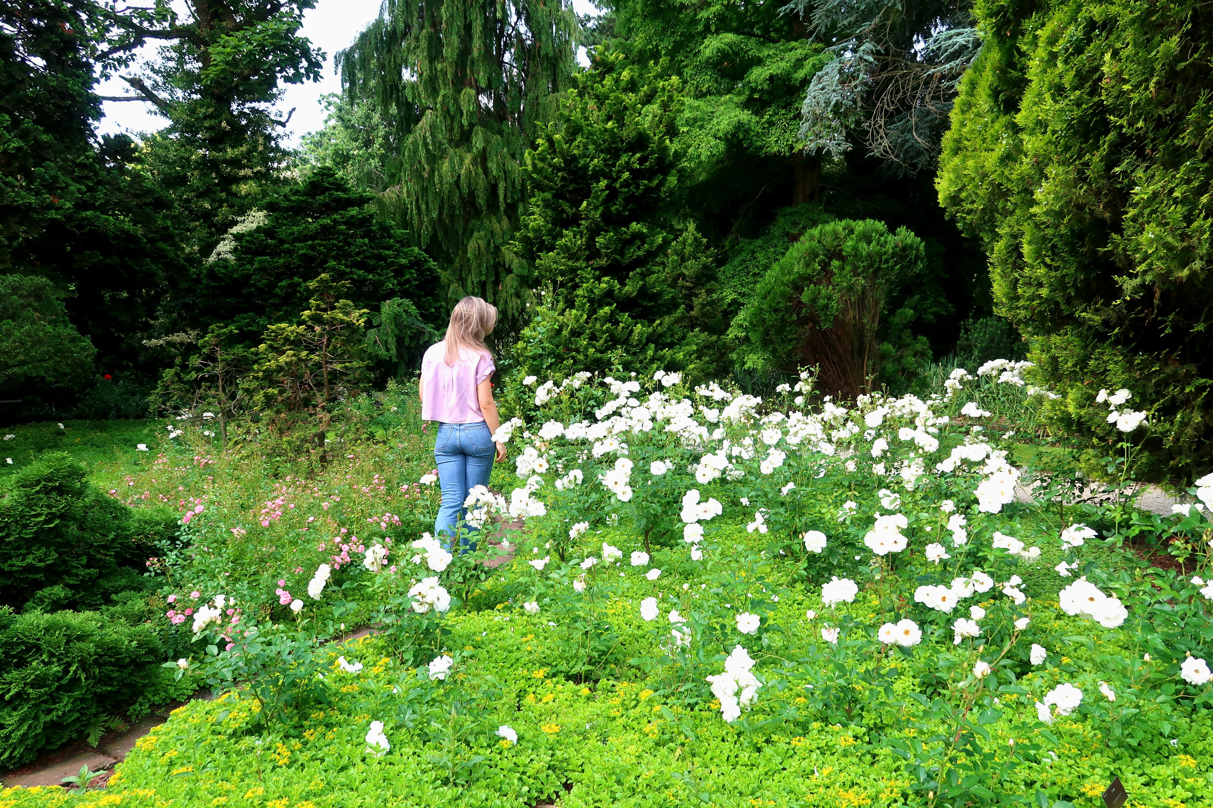 Dit pareltje van Rotterdam is een botanische tuin gelegen in Kralingen. Het is prachtig aangelegd en gevuld met bomen, struiken en de meest unieke bloemen. Of je nu van flora houdt of gewoon wat rust en stilte wilt, je bent welkom om alleen of met een gids langs te komen en rond te lopen.