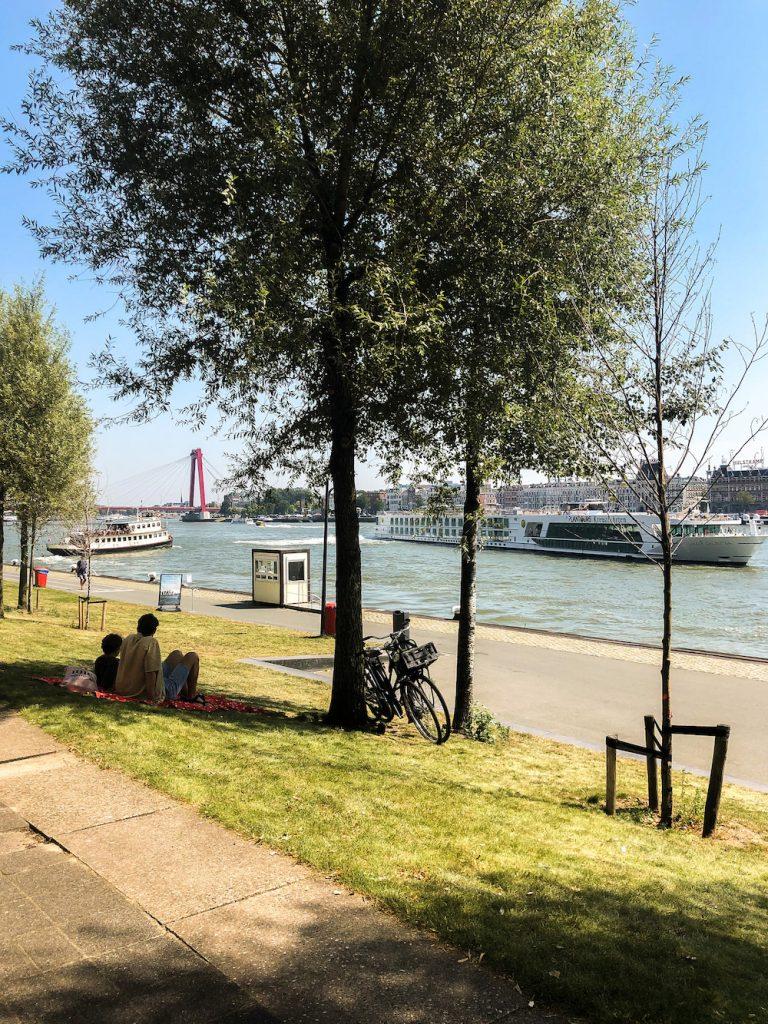 Tussen de Willemsbrug en de Erasmusbrug in heb je ook gewoon fijne plekken om te picknicken.